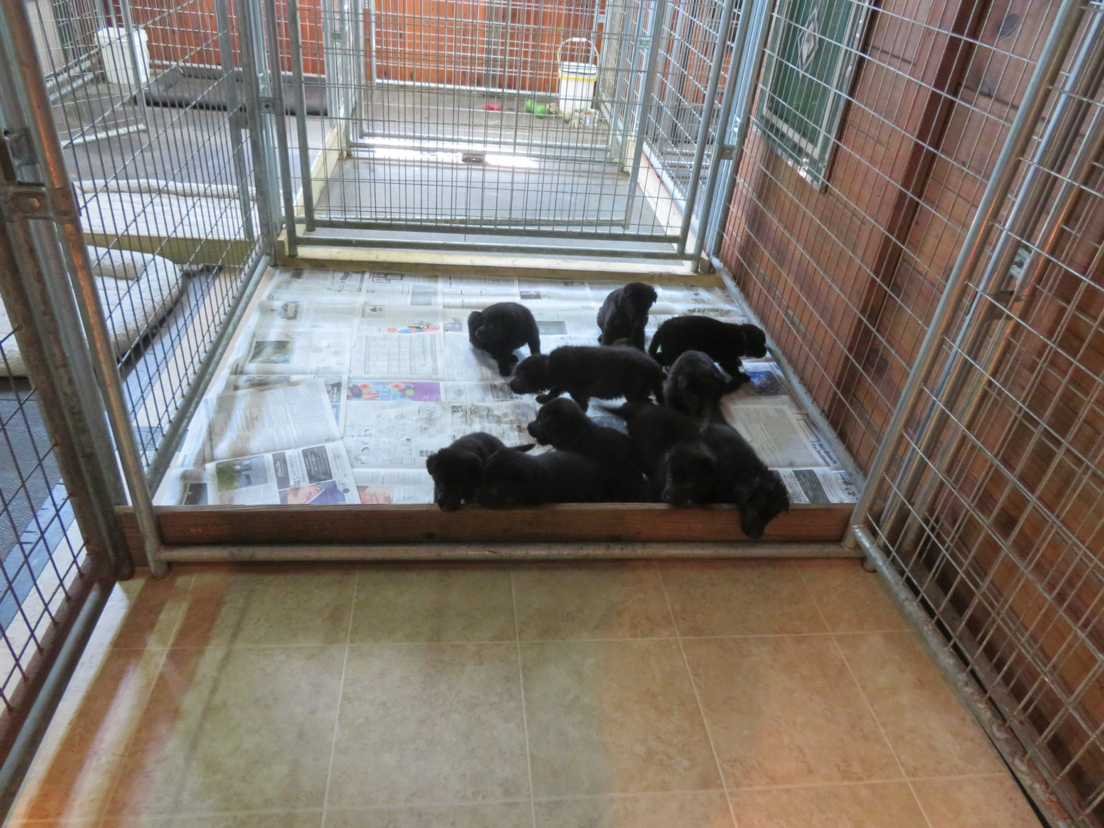 Inside Puppy Kennel (1)