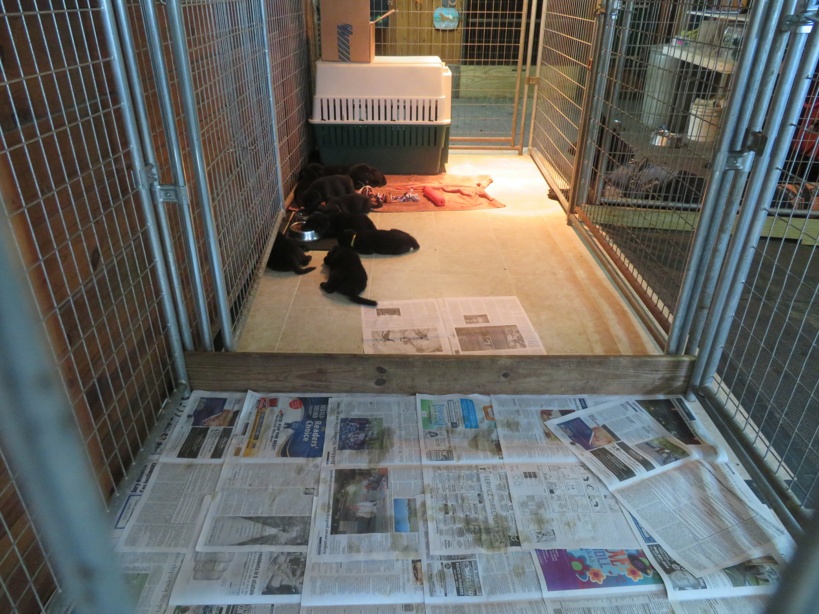 Inside Puppy Kennel (2)