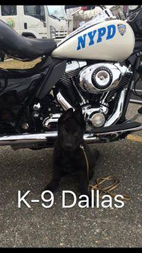 K9 Dallas