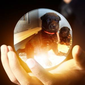 Puppy 7 Paint In The Crystal Ball Super Photo