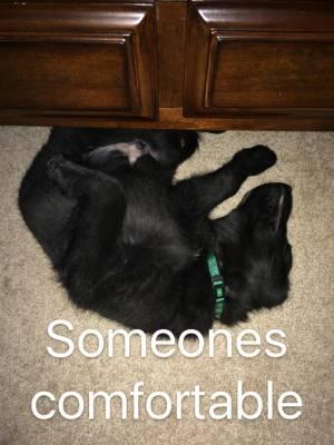 Dallas Comfy Sleeping