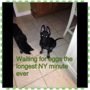 Lana And Samson Waiting For Their Eggs