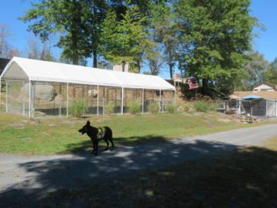 Outside Kennel Socialization Puppy Play Area (10)