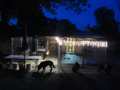 Outside Kennel Socialization Puppy Play Area (4)