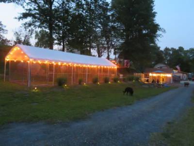 Outside Kennel Socialization Puppy Play Area (5)