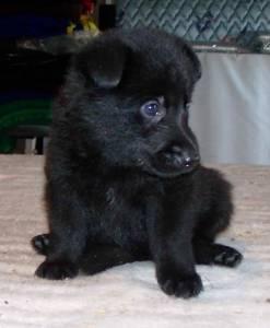 Puppy 3